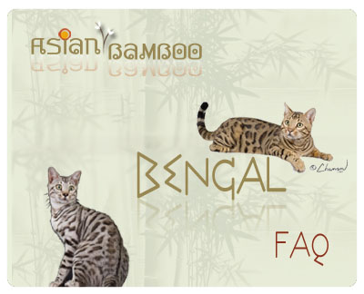 About Asian Bamboo Bengals